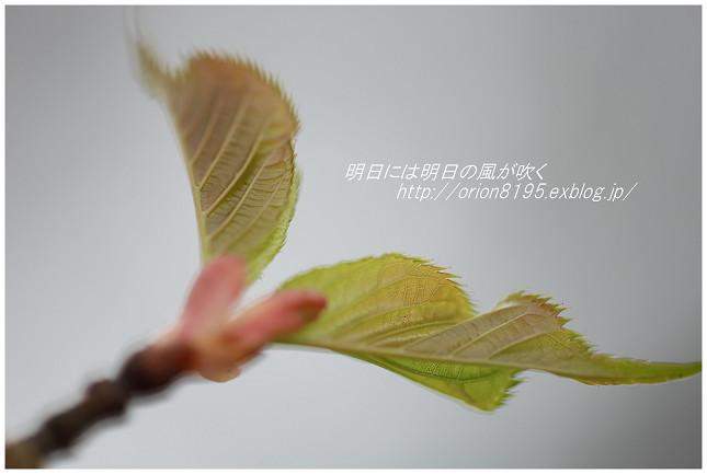 f0361079_19085741.jpg