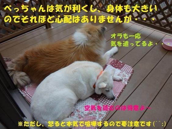 f0121712_08531266.jpg