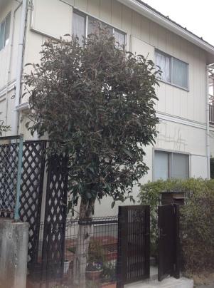 庭木剪定_c0186441_18580397.jpg