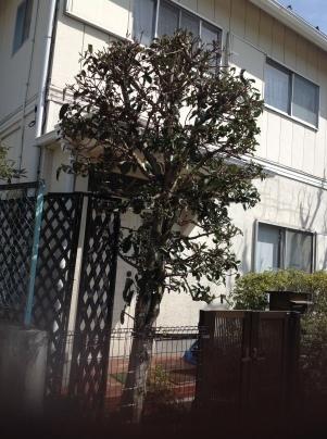 庭木剪定_c0186441_18581888.jpg