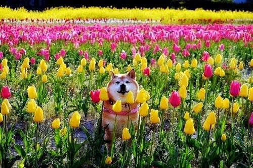 一日一春①_b0314043_21303952.jpg