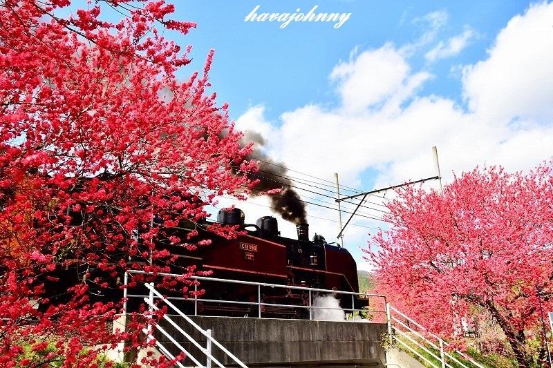 照れ屋の蒸気機関車_c0173762_20043572.jpg