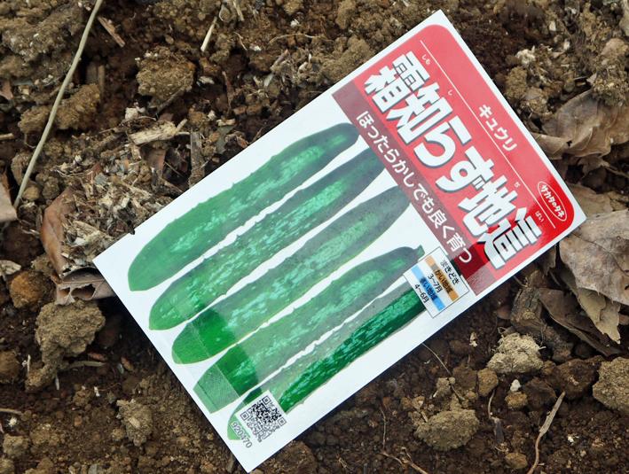 1回目の地這い胡瓜とトウモロコシの種まき3・18_c0014967_8543941.jpg