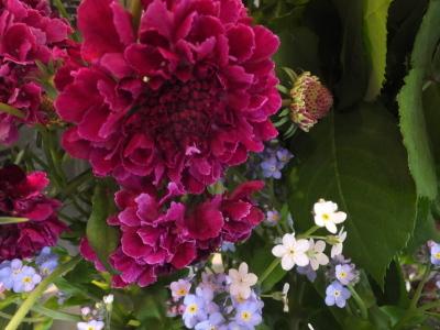 オークリーフ(花畑)_f0049672_09340840.jpg