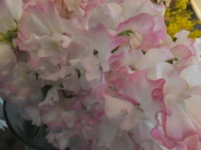 オークリーフ(花畑)_f0049672_09355397.jpg