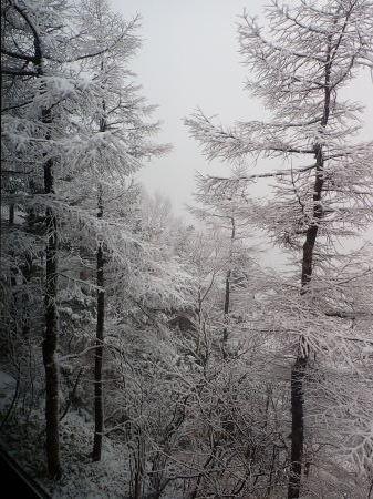 雪降りの朝_e0120896_07553165.jpg