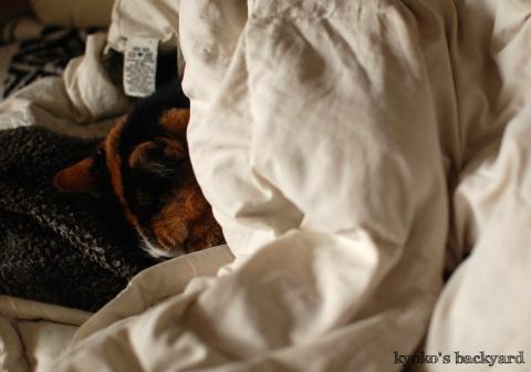 寒い日のお昼寝スタイル_b0253205_06442763.jpg