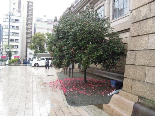 築地 「寿司岩」_e0116211_19531276.jpg