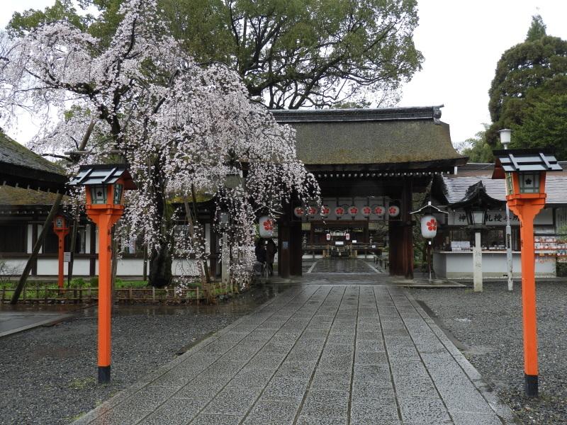 平野神社 魁(さきがけ)ざくら_e0048413_17293137.jpg