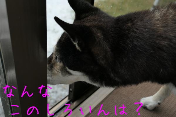 f0369014_15143748.jpg
