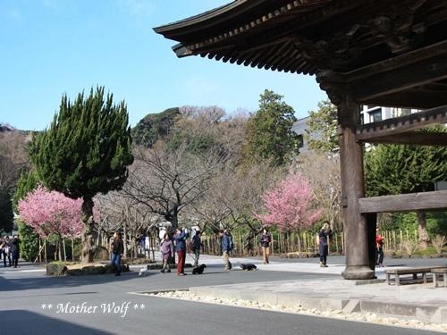 第24回マザーウルフ遠足 鎌倉天園レポート_e0191026_13250253.jpg
