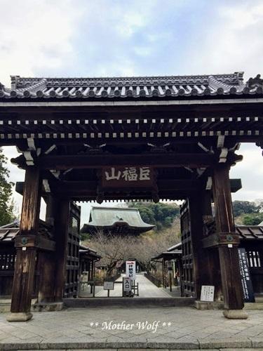 第24回マザーウルフ遠足 鎌倉天園レポート_e0191026_13404372.jpg