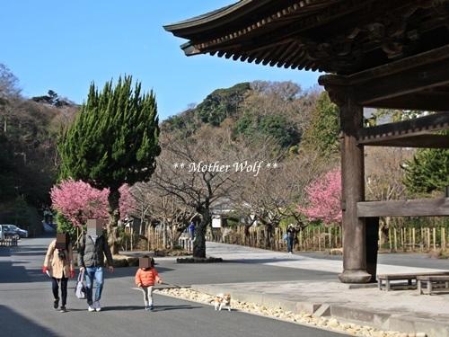 第24回マザーウルフ遠足 鎌倉天園レポート_e0191026_13465481.jpg
