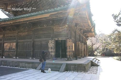 第24回マザーウルフ遠足 鎌倉天園レポート_e0191026_14293260.jpg