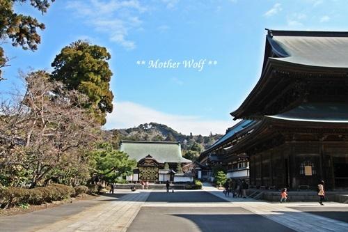 第24回マザーウルフ遠足 鎌倉天園レポート_e0191026_14310220.jpg