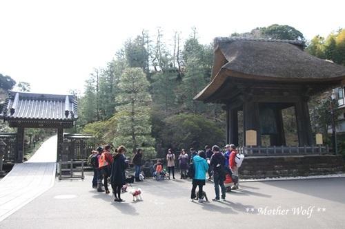 第24回マザーウルフ遠足 鎌倉天園レポート_e0191026_15145258.jpg