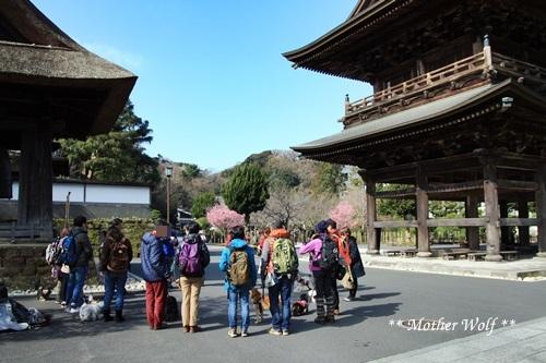第24回マザーウルフ遠足 鎌倉天園レポート_e0191026_15440511.jpg