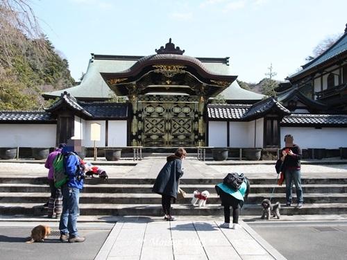 第24回マザーウルフ遠足 鎌倉天園レポート_e0191026_16023001.jpg