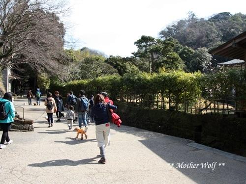 第24回マザーウルフ遠足 鎌倉天園レポート_e0191026_16360460.jpg