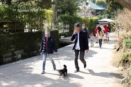 第24回マザーウルフ遠足 鎌倉天園レポート_e0191026_16572911.jpg