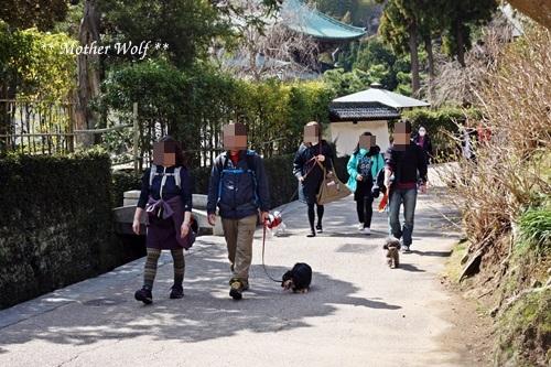 第24回マザーウルフ遠足 鎌倉天園レポート_e0191026_17000622.jpg