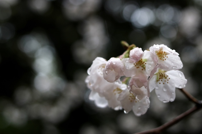 上野ー御徒町_f0348831_23273648.jpg
