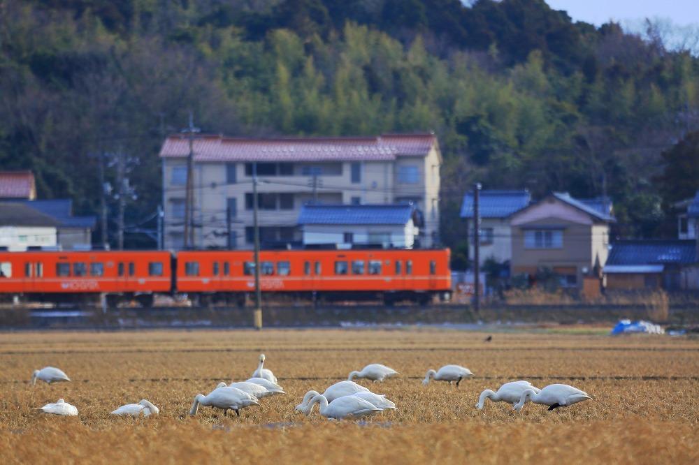 一畑電車 2月編_a0294534_12521842.jpg