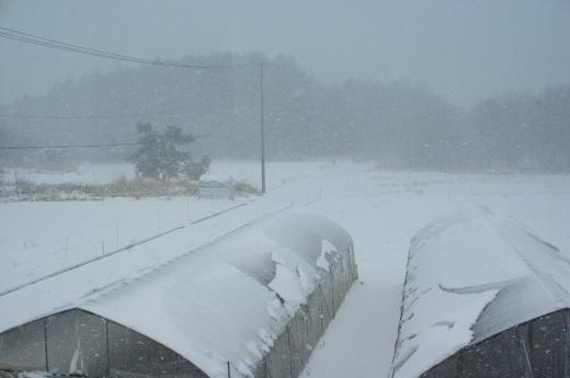 3月の雪_c0110869_12432096.jpg