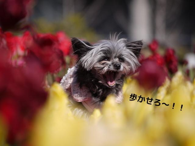 うめきたガーデン~しょぼい!?~_b0358575_11355260.jpg