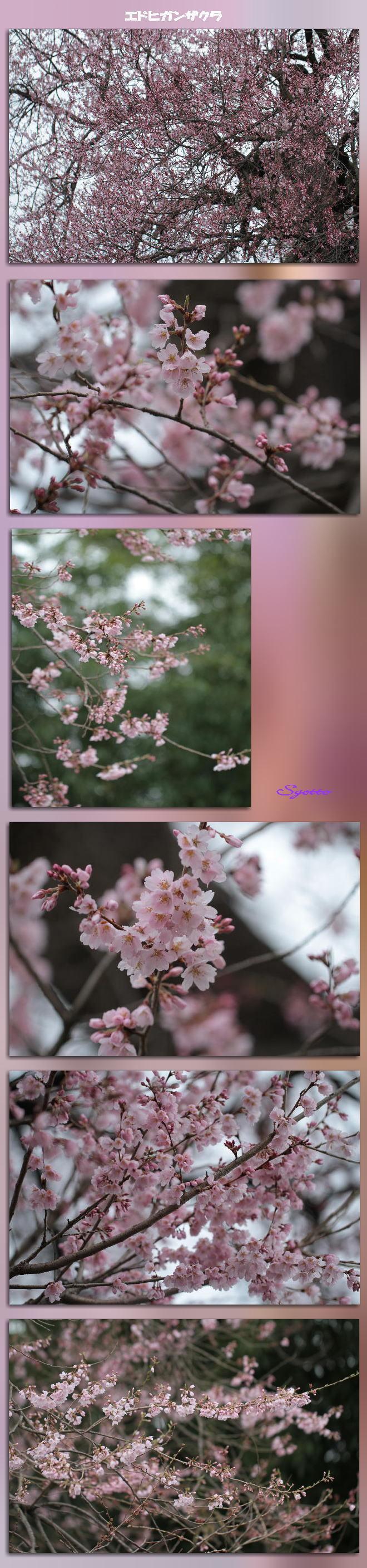 f0164592_13013806.jpg