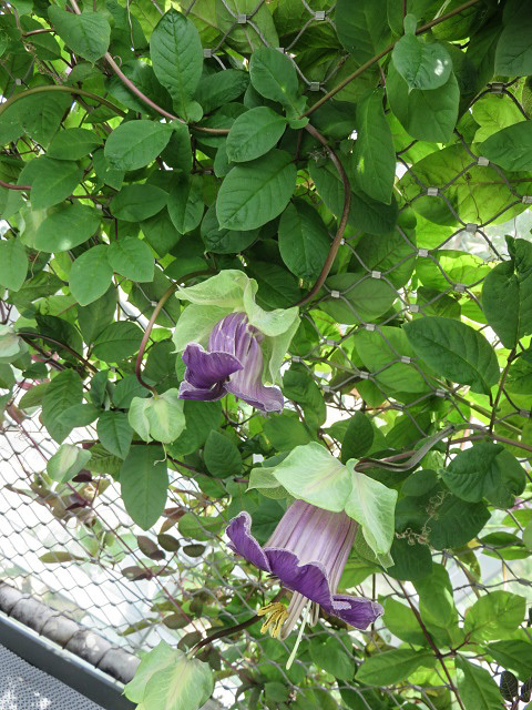 花は華 ~ガーデンズ・バイ・ザ・ベイ~_f0346196_22225235.jpg
