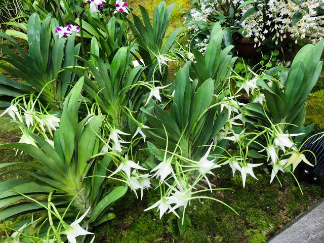 花は華 ~ガーデンズ・バイ・ザ・ベイ~_f0346196_22242250.jpg