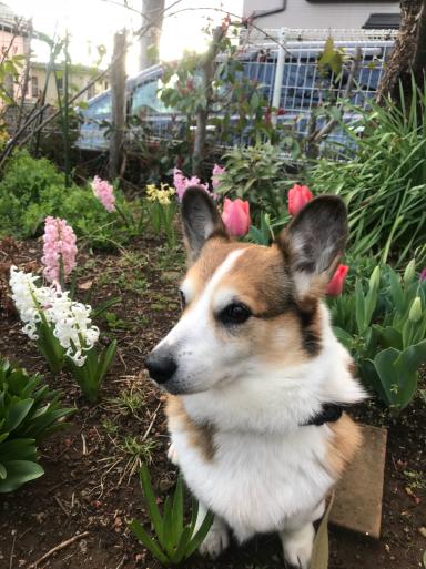 春の庭_f0101201_17033336.jpg