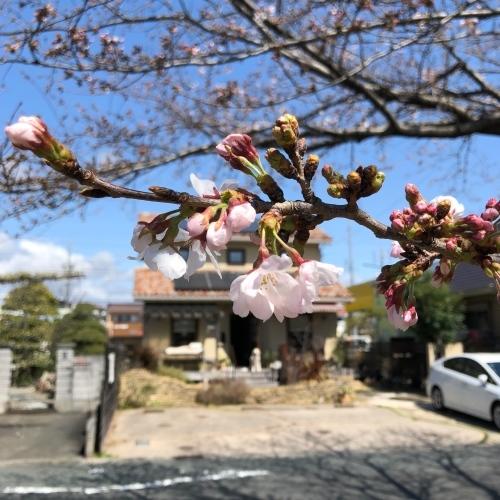 『夜桜カフェ』&『臨時営業』のご案内*_a0322702_13344811.jpeg