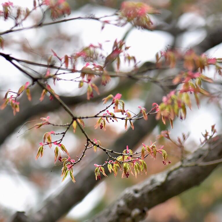 春が来た03_f0099102_17461287.jpg