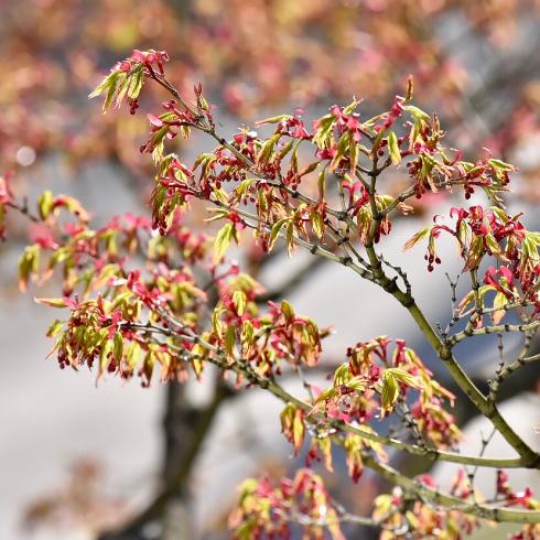 春が来た03_f0099102_17464428.jpg