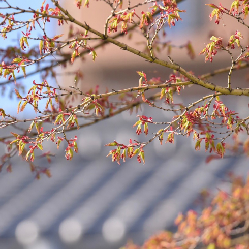 春が来た03_f0099102_17465989.jpg