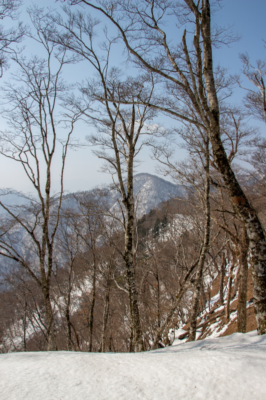 早春の台高山系 明神平・薊岳_b0244811_21361035.jpg