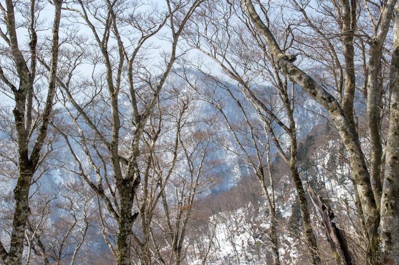 早春の台高山系 明神平・薊岳_b0244811_23265079.jpg
