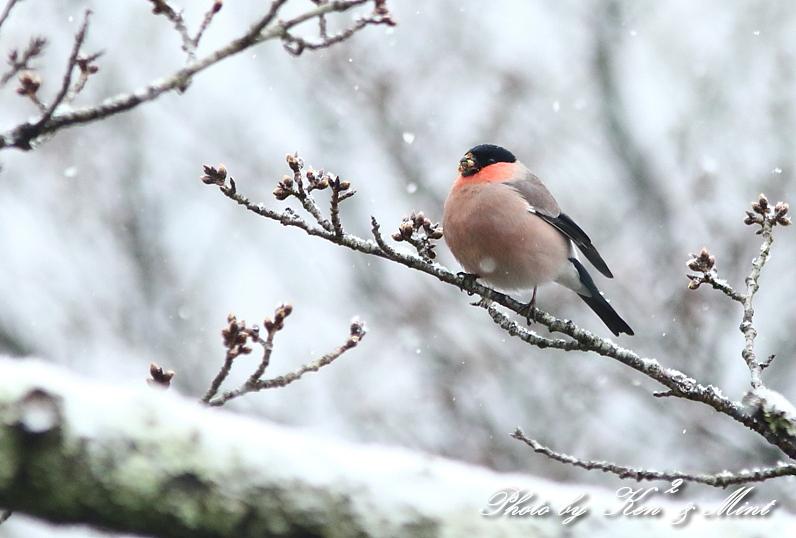 雪の中の「ウソ」さん♪ 過去の在庫から・・_e0218518_20200801.jpg