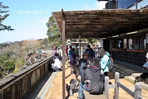 第24回マザーウルフ遠足 鎌倉天園レポート_e0191026_16111707.jpg