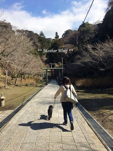 第24回マザーウルフ遠足 鎌倉天園レポート_e0191026_16153426.jpg
