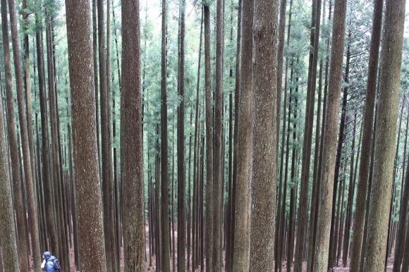 日本vs欧州調査レポート 02 現代林業のパイオニア_a0355629_10280451.jpg