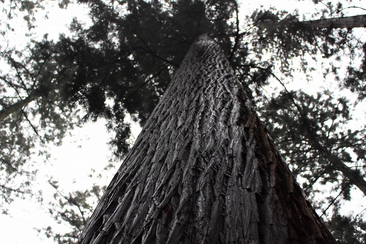 日本vs欧州調査レポート 02 現代林業のパイオニア_a0355629_10281102.jpg