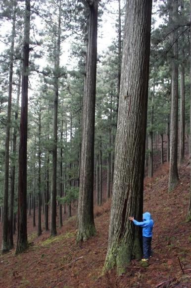 日本vs欧州調査レポート 02 現代林業のパイオニア_a0355629_10400255.jpg