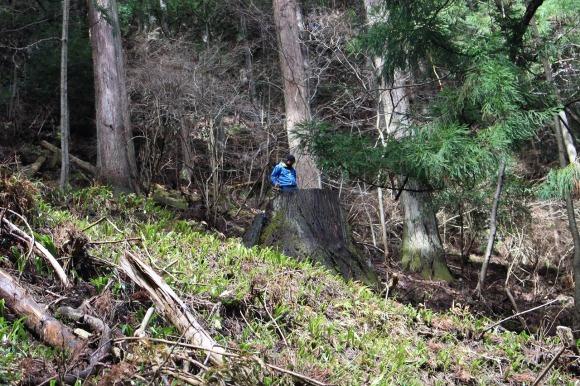 日本vs欧州調査レポート 02 現代林業のパイオニア_a0355629_12124070.jpg