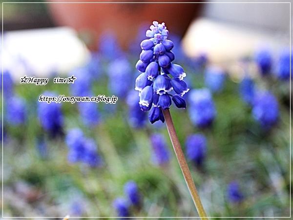 カジキフライとおむすび弁当と我が家の庭~おうちごはん♪_f0348032_18533910.jpg
