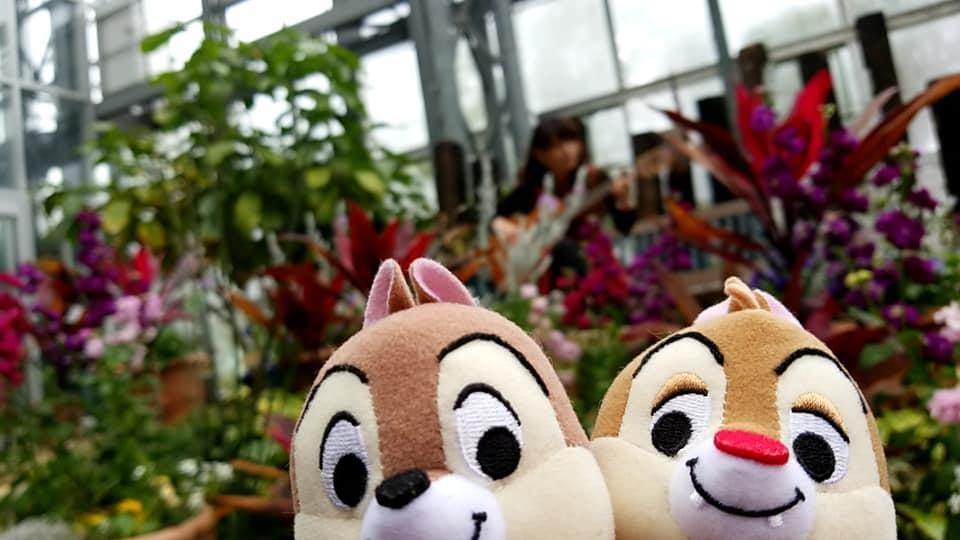 農業文化園戸田川緑地さくらまつり温室ギターコンサート2018_f0373339_14522073.jpg