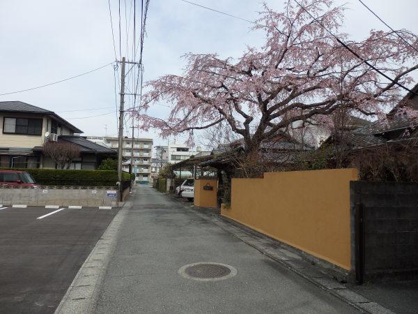熊本県八代の隠れ家的お食事処_f0337554_11252658.jpg