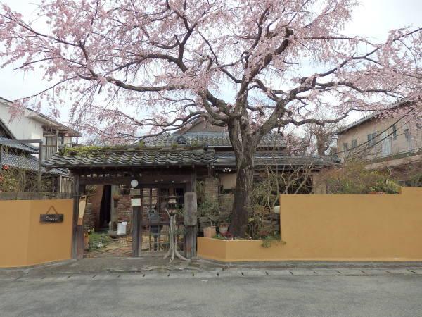 熊本県八代の隠れ家的お食事処_f0337554_11294220.jpg